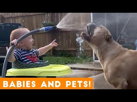 Most Adorable Pet and Baby Compilation Ever   Funny Pet Videos