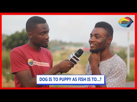 DOG is to PUPPY as FISH is to…?   Street Quiz   Funny Videos   Funny African Videos  