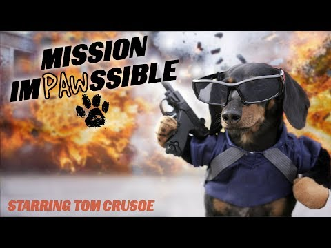 Ep 12: MISSION IMPAWSSIBLE (Finale) – Funny Dog Video