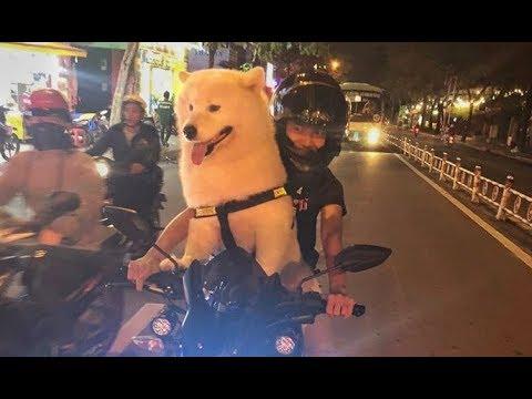 Những Chú Chó Dễ Thương Hài Hước – Cute And Funny Dog Videos Compilation