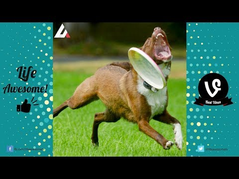 TRY NOT TO LAUGH Funny Dogs Fails Compilation | Best FAILS of Life Awesome