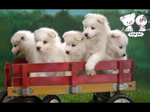Baby Dogs – Cute and Funny Dog Videos Compilation (2019) | 01