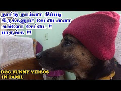 நாட்டு நாய்னா இப்படி இருக்கணும். சேட்டைன்னா அவ்ளோ சேட்டை. பாருங்க | Funny Dog Videos in Tamil
