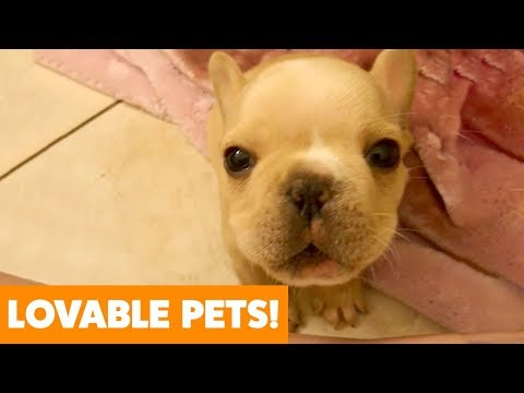 Most Adorable Dogs And Cats | Funny Pet Videos
