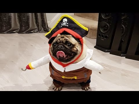 Funny Dog Trying Costumes –  Funniest Dog Video