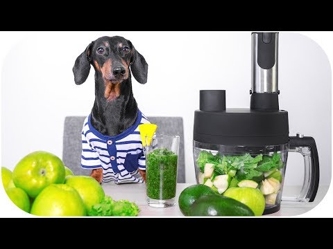 I'll help you to detox! Funny dachshund dog video!