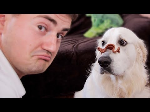 My Funny Dog Reacts to Food on His Nose – Cute Golden Retriever [CHALLENGE]