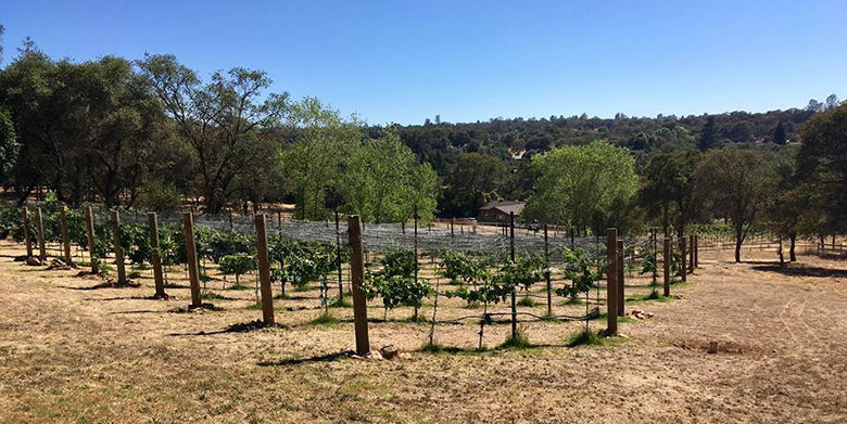 Sierra Foothills wine growers anticipate a 'normal' harvest in 2018.