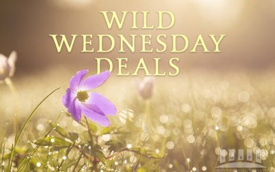 Spring Into Wild Wednesday March 3, 2021