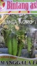 TIMUN MANGGALA