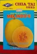 golden melon, melon kuning, lmga agro, Jual Bibit Melon Melindo 6 F1