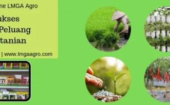Kunci Sukses, Usaha Pertanian, Sukses, Usaha, Pertanian, Hidroponik, Budidaya Tanaman, Toko Pertanian, Benih Tanaman, Sistem Hidroponik, LMGA Agro