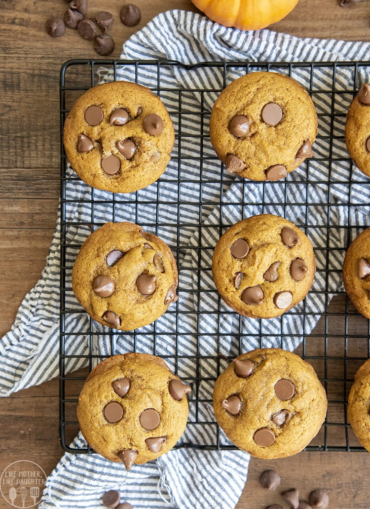 Pumpkin Chocolate Chip Muffins are perfect for breakfast or a snack