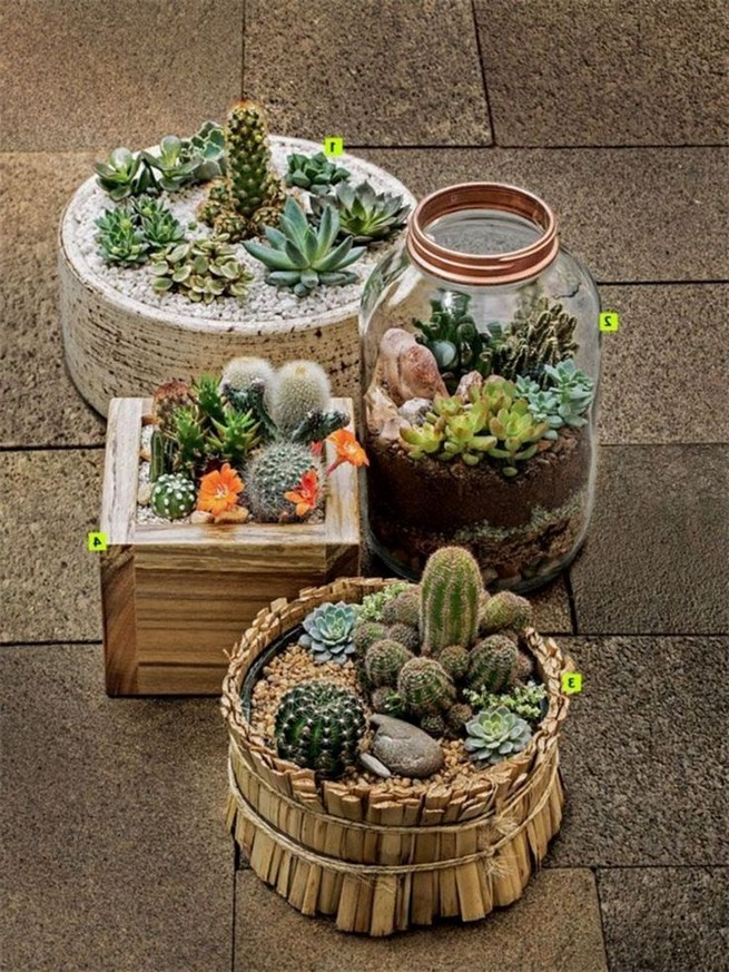 11 Lovely Small Cactus Ideas For Interior Decorations 20