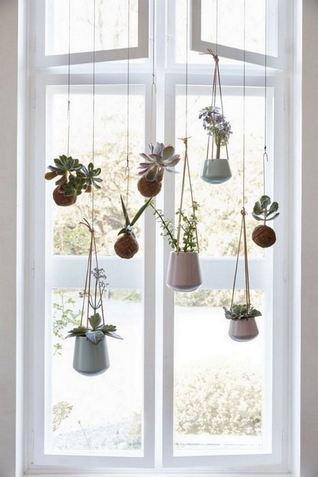 11 Lovely Small Cactus Ideas For Interior Decorations 27