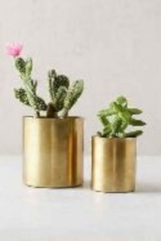 11 Lovely Small Cactus Ideas For Interior Decorations 31