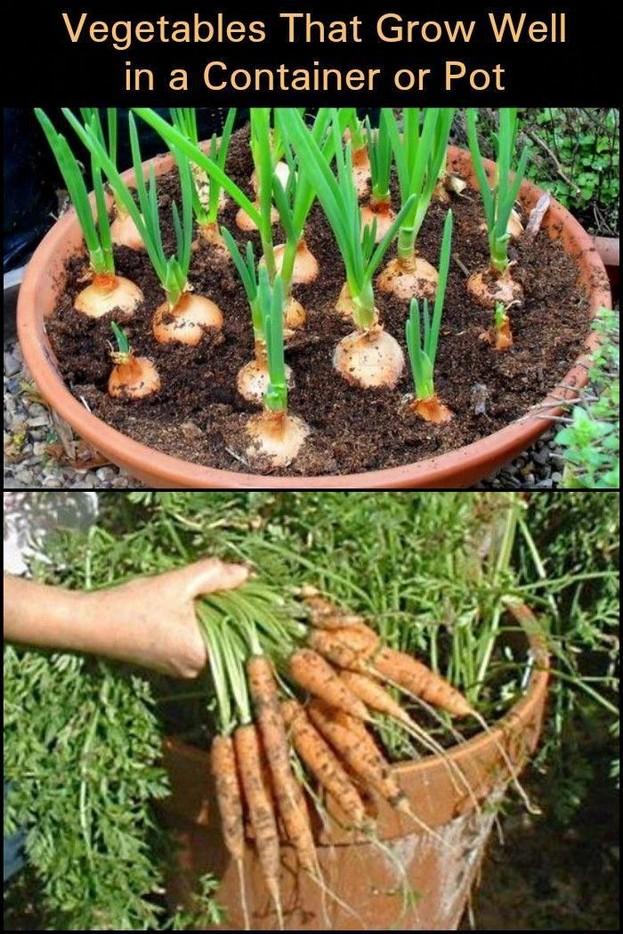 21 Best Container Vegetables Garden Inspirations Ideas 07