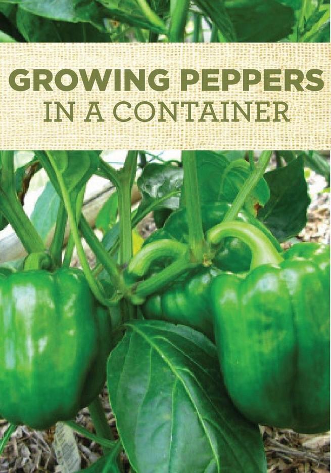 21 Best Container Vegetables Garden Inspirations Ideas 09