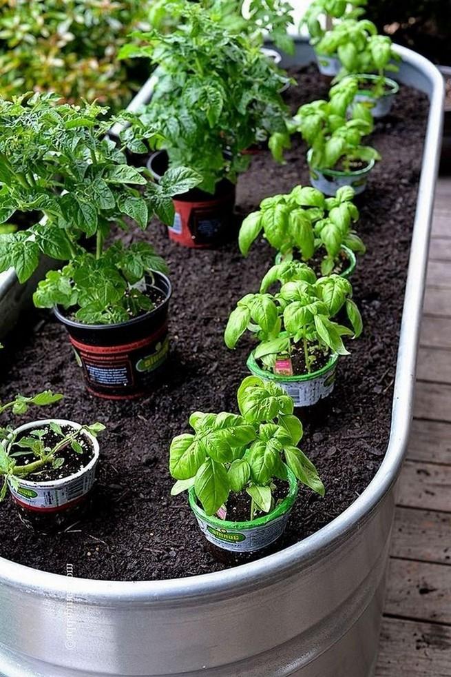 21 Best Container Vegetables Garden Inspirations Ideas 12
