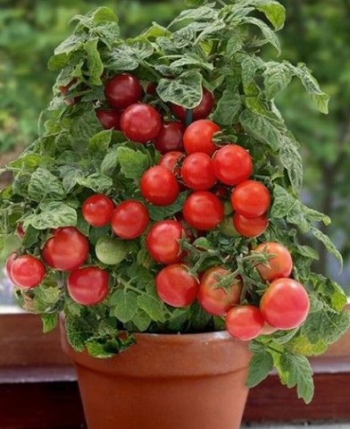 21 Best Container Vegetables Garden Inspirations Ideas 16