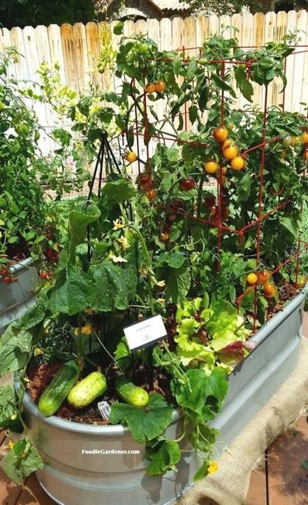 21 Best Container Vegetables Garden Inspirations Ideas 20