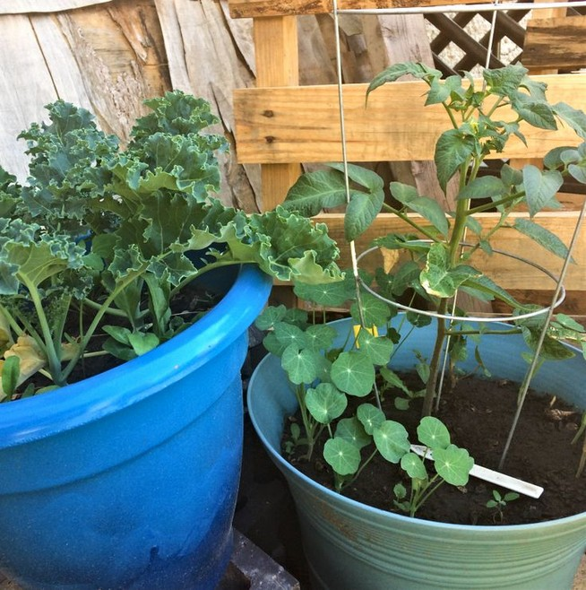 21 Best Container Vegetables Garden Inspirations Ideas 21