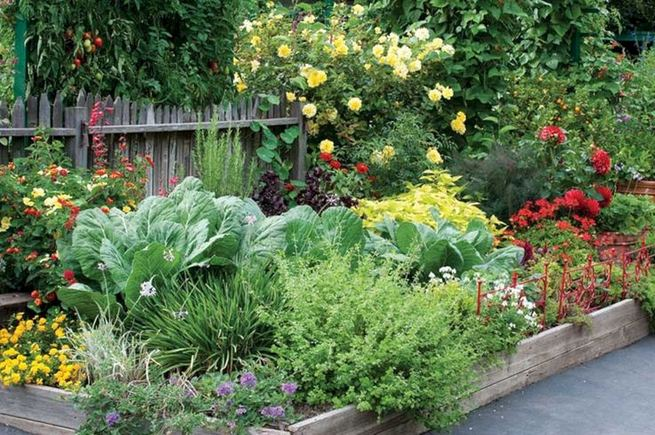 15 Wonderful Edible Plants Ideas To Enhance Your Backyard Garden 01