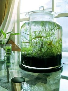 21 Creative DIY Indoor Garden Ideas 20