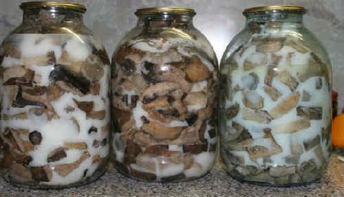 Жареные грибы на зиму в банках: рецепты с фото, видео