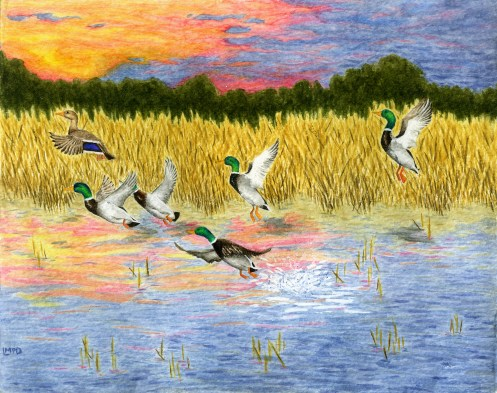 "Close-up of one of my paintings: ""Mallards at Dawn."""