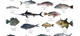 الاسماك العظمية الليبية