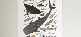 الاسماك الغضروفية في الساحل الليبي