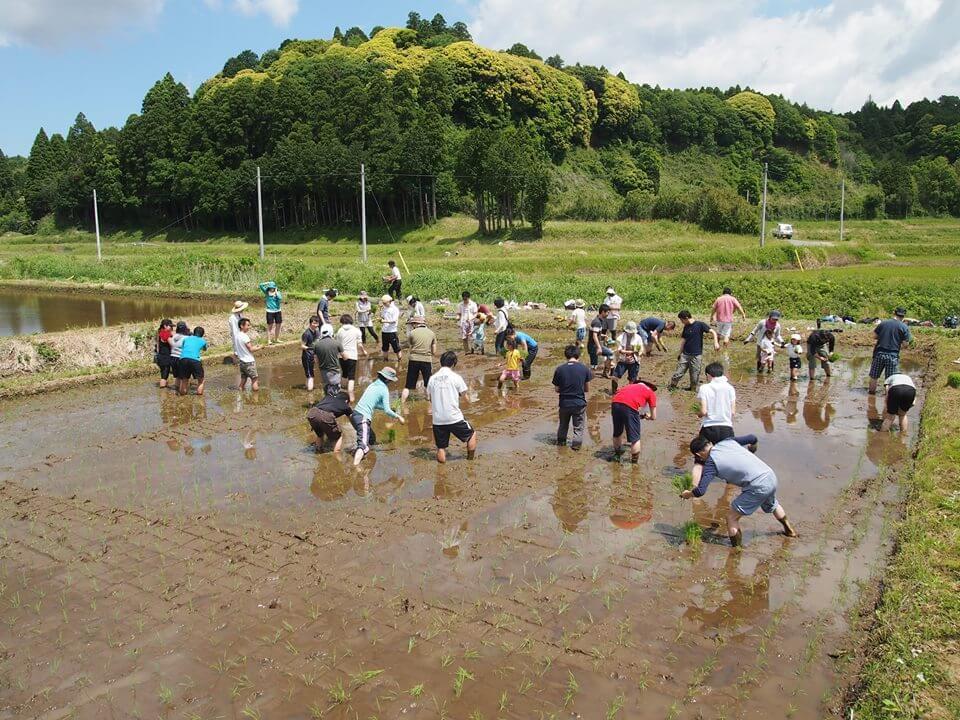リバネスの自給率200%プロジェクト  2015年度田植えイベントを開催  食育スクール「アグリサイエンスラボ」プログラムも共催