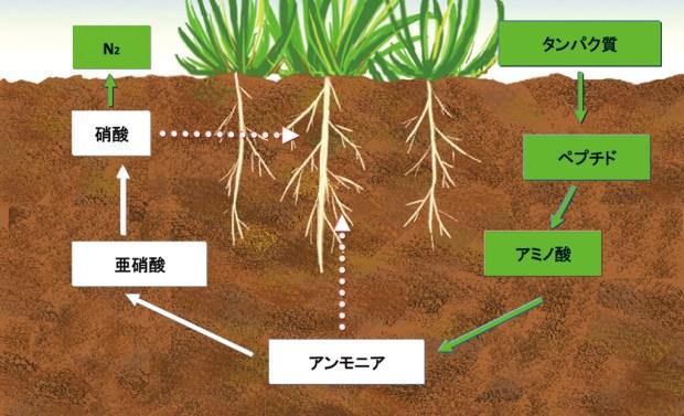 図1:有機肥料の分解過程のイメージ