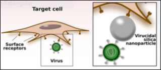 viral-inhibition-mechanis-mediated-by-surface-modified-silica-nanoparticles-figura-1