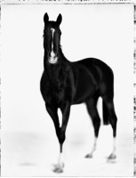 four<br />  equestrian studies