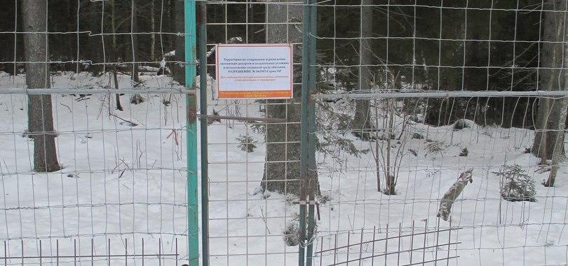 Карельский турбизнес холдинга «Адамант» устроил вооруженную облаву на питерских экологов