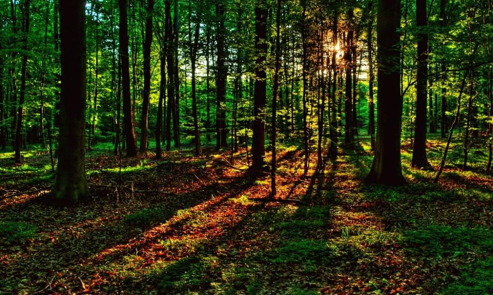 России жизненно необходима реанимация её лесного хозяйства