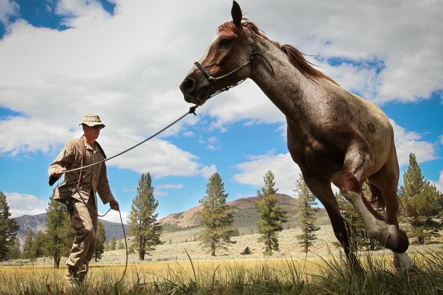 horse-80093_1280