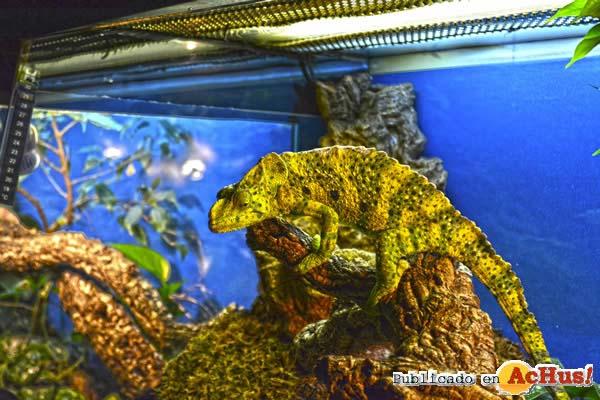 Terra Natura Benidorm crea un programa de actividades de Carnaval basado en el mimetismo de sus animales