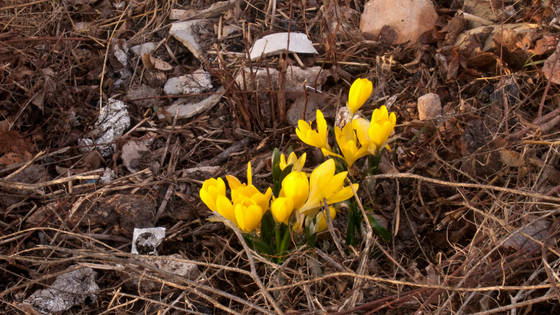 Investigadors de la UA identifiquen dues noves espècies florals a la comarca de l'Alcoià