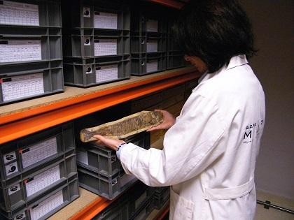 La Diputación de Alicante apoya al Museo Paleontológico de Elche en la conservación de su patrimonio