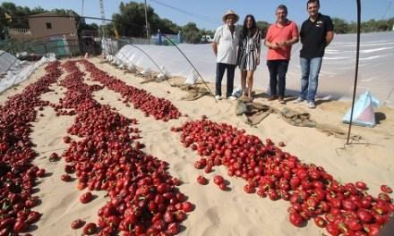 Guardamar reivindica la seua nyora, única en tota Espanya