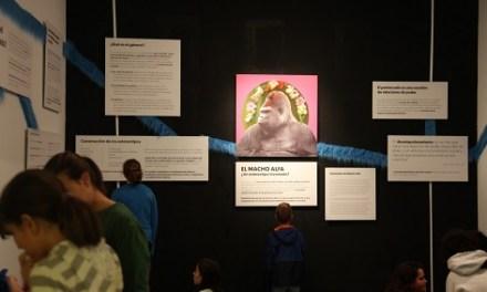 El MACA desarrolla el proyecto «Bricolaje social: aula de desempoderamiento del macho alpha», ganador de la Convocatoria RESET del Consorci de Museus