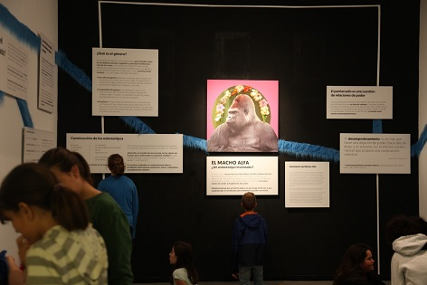 El MACA desenvolupa el projecte «Bricolatge social: aula de desempoderamiento del mascle alpha», guanyador de la Convocatòria RESET del Consorci de Museus