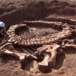 Un estudio aporta datos inéditos sobre el Spinophorosaurus depositado en el Museo Paleontológico de Elche