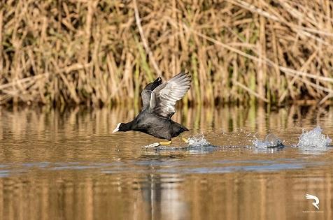 El río Algar experimenta una gran afluencia de avifauna y nuevas especies en la época de nidificación coincidiendo con el confinamiento