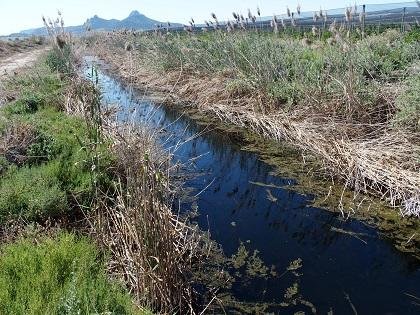 La importancia del agua es el nuevo proyecto de 'Villena Viva'