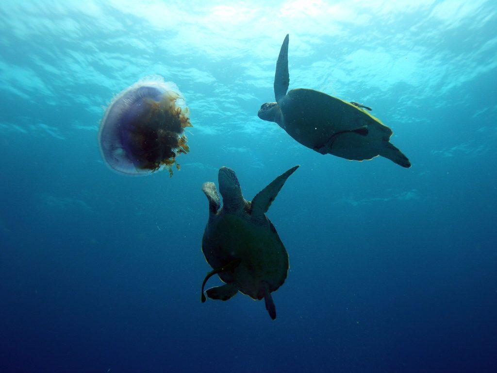 Bohol Turtles
