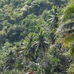 Loboc riverdinner cruse bohol philippines 0011